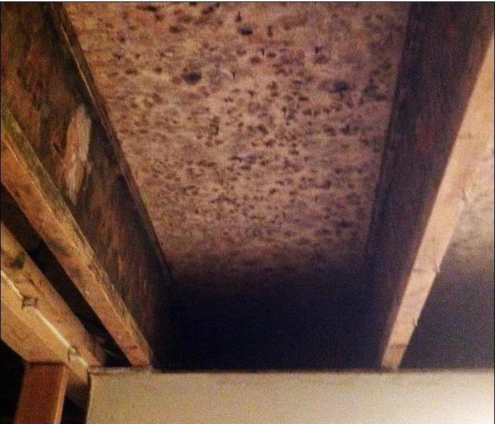 mold spots and growth on the interior of an attic crawl space