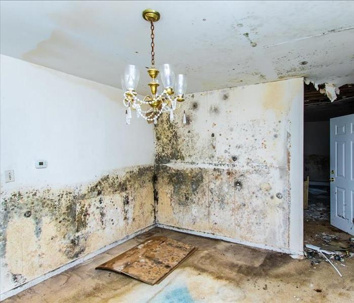 mold growing on walls and ceiling damaging a dining room